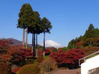 【秋季限定】バラと紅葉 彩りに満ちた芦ノ湖畔の秋!夕・朝食付