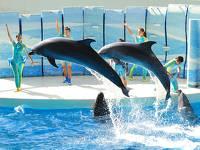 公式サイトが一番お得!新江ノ島水族館ペア入場券付プラン