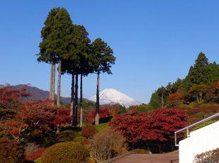 【秋季限定】バラと紅葉 彩りに満ちた芦ノ湖畔の秋!夕・朝食付 写真