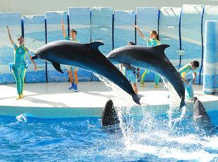 公式サイトが一番お得!新江ノ島水族館ペア入場券付プラン 写真