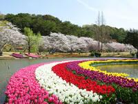 【浜名湖花フェスタ】はままつフラワーパーク入場券付■素泊り■