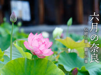 6月の奈良 伝統行事・観光行事・イベント