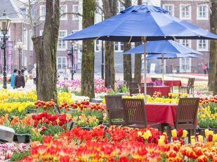 【花満開の季節】フラワーフェスティバルへようこそプラン 写真