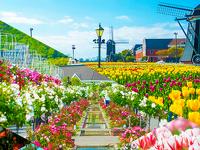 花の街~フラワーフェスティバル~