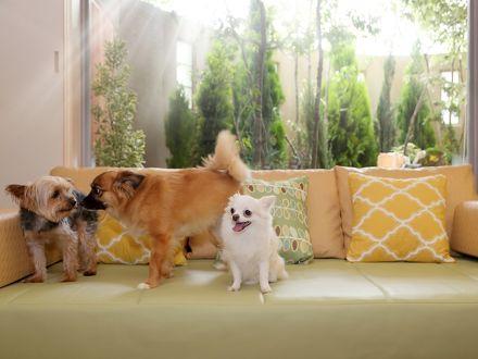 Dogサバトリーのある宿 ご 遊庭 写真