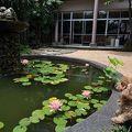 写真:ペットと泊まれる森のホテル ホテル四季の蔵
