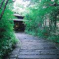 静寂な森の宿 山しのぶ 写真