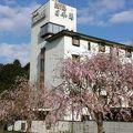 ホテル日本海 写真