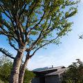 由布院別邸 樹 写真