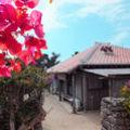 民宿 小浜荘 <竹富島> 写真