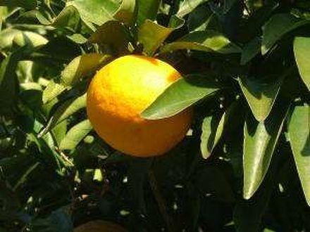オレンジヒルズ・イン東伊豆 写真