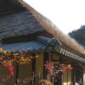 里山の自然学校 紀泉わいわい村 写真