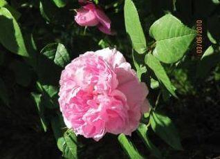 La Roseraie 写真