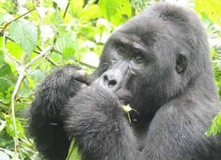 Gorilla Safari Lodge 写真