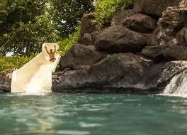 ワイコロア ビーチ マリオット リゾート & スパ 写真