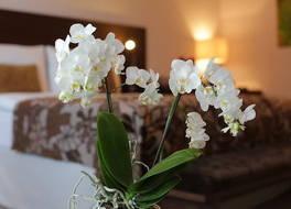 Hotel Zochova Chata 写真