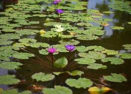 アマタ ガーデン リゾート バガン 写真