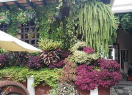 Los Olivos Boutique Hotel Antigua Guatemala 写真