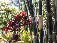 Kilauea Hospitality Group 写真