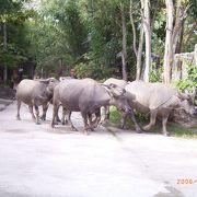 プーケット動物園