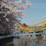 観覧車から眺める桜は最高♪