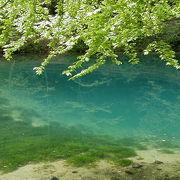 森の中に「青い」泉が‥‥