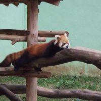 千葉市動物公園 写真