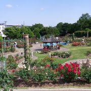 入園も駐車場も無料でした 『若園公園・バラ園』