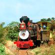 砂糖きび列車