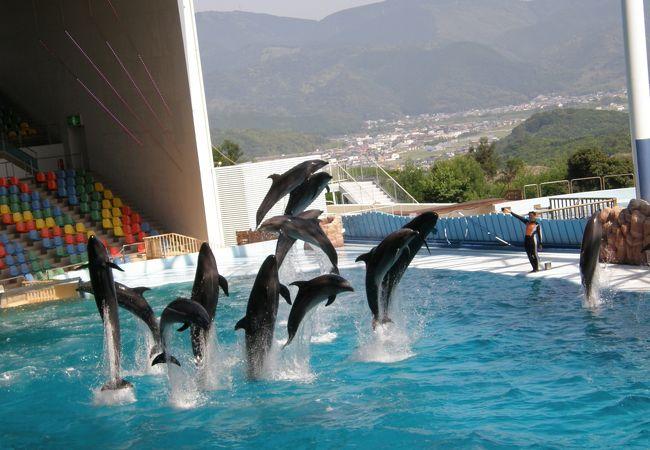 ショー参加のイルカ全部でジャンプ!爽快です。