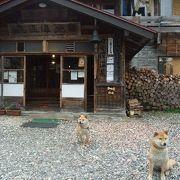 可愛い犬たちが迎えてくれる山奥の秘湯
