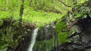 たまだれの滝は小さくて可愛い滝で清涼感たっぷり♪