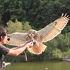 角質鳥(取り)
