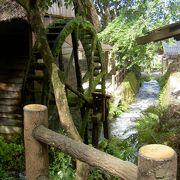 プチ森林浴