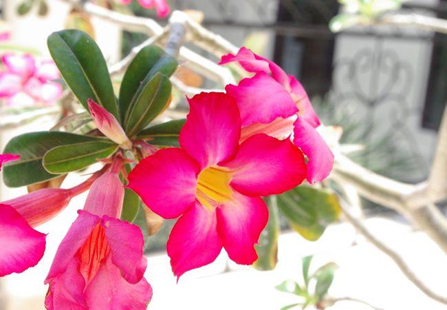 お花も沢山咲いていました。