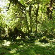 温帯雨林などの特異な自然環境で世界遺産!