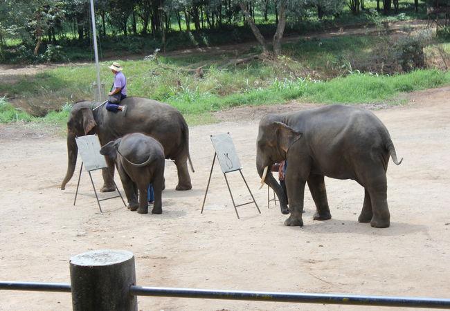 象のお絵かき、すごいです