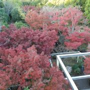 「水景園」内の『紅葉谷』の紅葉は穴場スポット