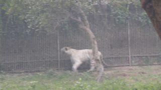 国立動物園