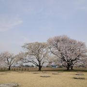 何といっても桜が見事!