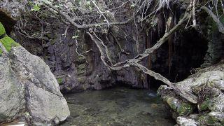 泉までの植物園が素晴らしい。