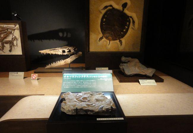 恐竜の卵の化石