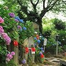 金剛山寺(矢田寺)