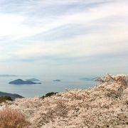 満開の花見越しの瀬戸内海!