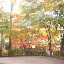門を出ると昭和の雰囲気の参道があります