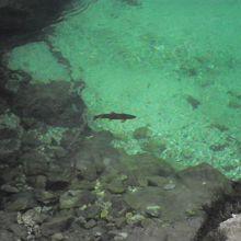 川底には魚も泳いでいました。