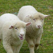 子ヤギや子羊がいっぱいです!
