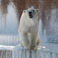 天王寺動物園 写真