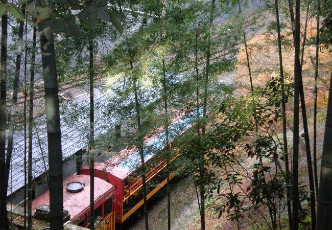 上から見たトロッコ列車