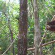 ラサリアオランウータン保護区